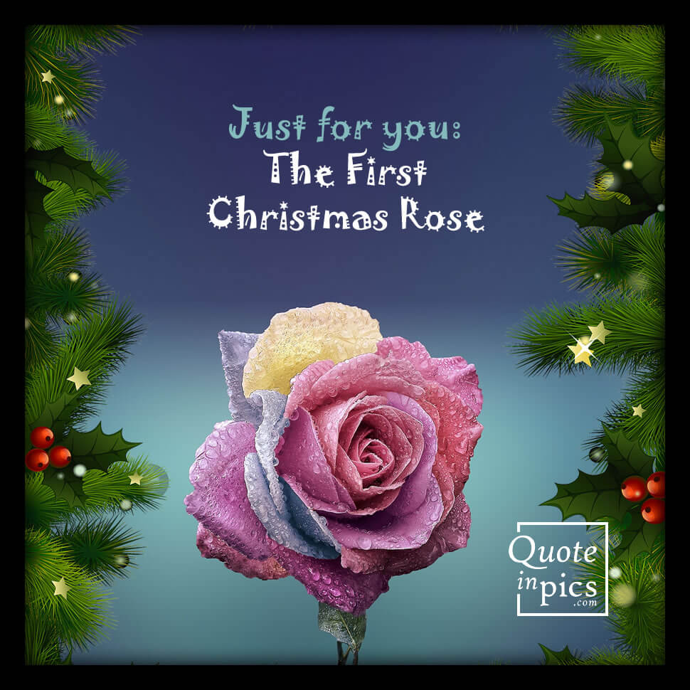 For you: The first Christmas rose